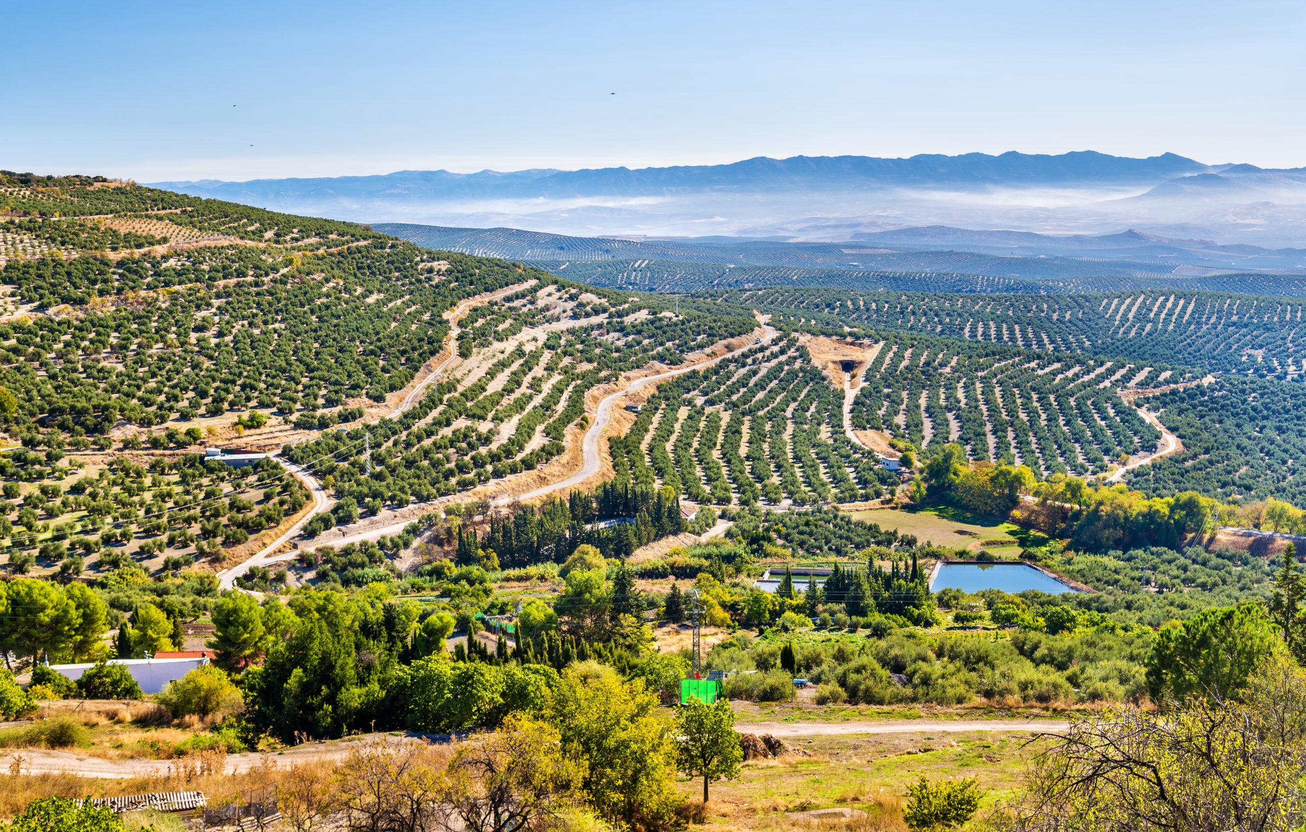 Landscape with olive fields near Ubeda - Spain